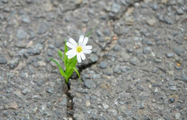 сила воли. как развить силу воли. как укрепить силу воли. как увеличить силу воли.